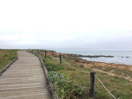 Moonstone Beach: photo4.jpg