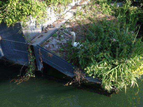 Jardin flottant niki de saint phalle p rizs for Jardin flottant
