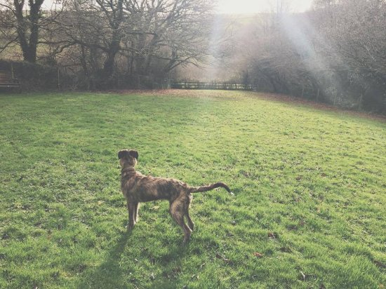 Duloe, UK: Secure dog exercise paddock