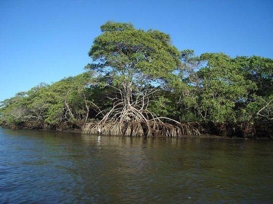 Área do Mangue em Rio das Ostras-RJ