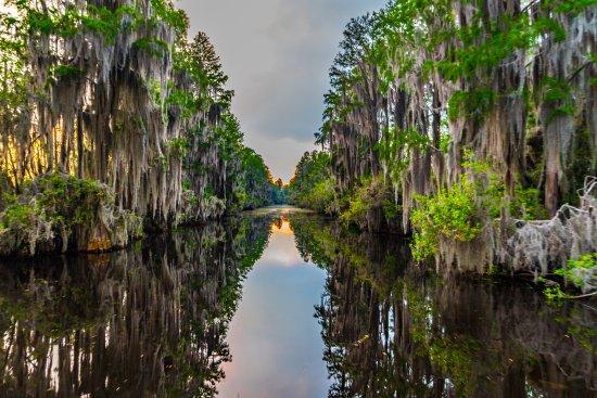 Folkston, GA: Swamp not burned in 2011 fire