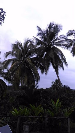 Petit-Bourg, Guadeloupe: végétations du jardin