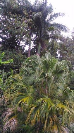 Petit-Bourg, Guadeloupe: végétation du jardin