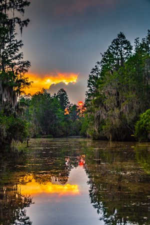 Folkston, GA: Sundet in the Old swamp