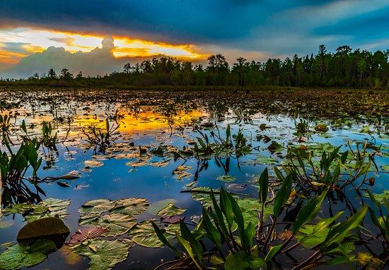 Folkston, GA: Sunset over the Prairie