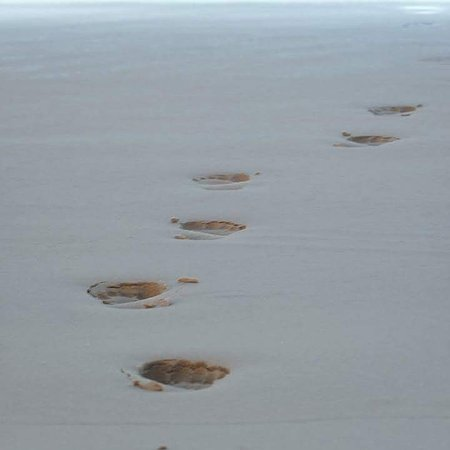 Barefoot Beach Camp : Beach Walks in scenic solitude