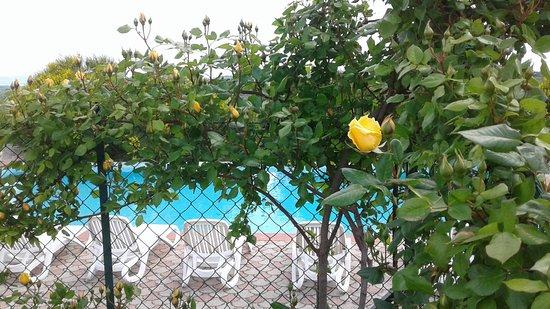 San Venanzo, Italy: vista piscina estiva