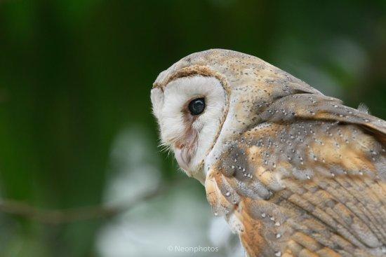 Perai, Malaysia: Sample of bird
