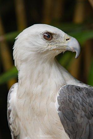 Perai, ماليزيا: Sample of bird