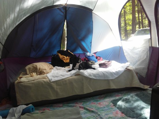 Bismarck, AR: My Boston Terrier Kyah taking a nap in the tent this past weekend campsite #22