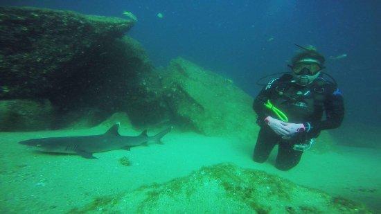 Los Cabos Deep Blue: photo1.jpg