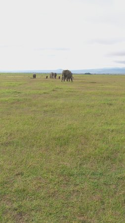 Amboseli National Park, Kenya: IMG_20170507_073652_large.jpg
