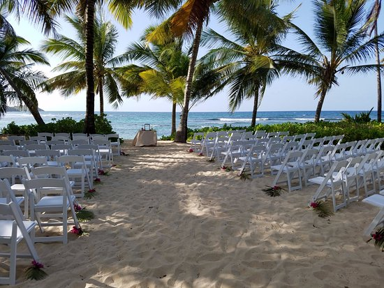 The Palms at Pelican Cove: Coconut Palm Grove, where many beautiful weddings are held