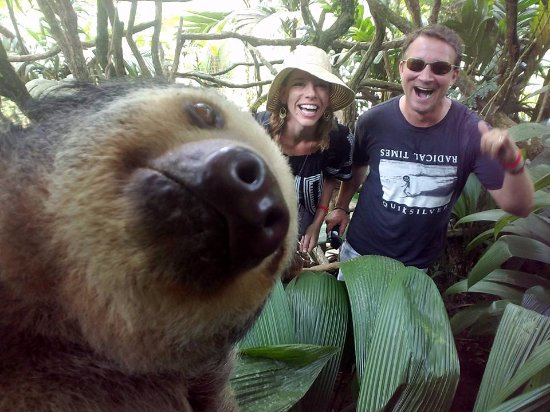 The Springs Resort and Spa: Sloth Selfie at Club Rio Ecological Preserve
