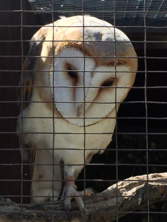 West Sussex Falconry: photo0.jpg