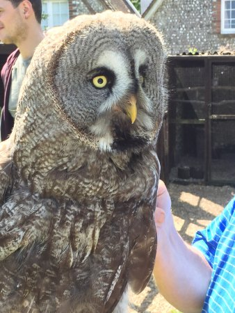 West Sussex Falconry: photo1.jpg