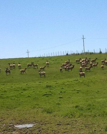 Ashland, NE: Elk