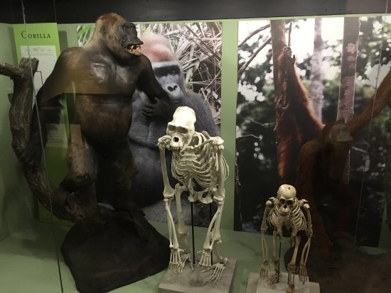 Iziko South African Museum and Planetarium: photo7.jpg