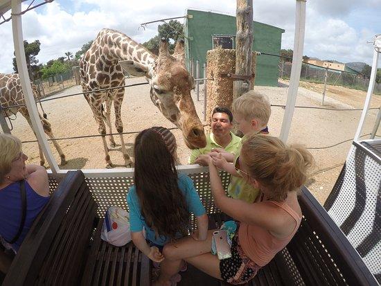 Safari Zoo: photo4.jpg
