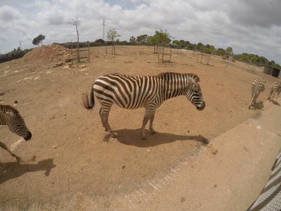 Safari Zoo: photo6.jpg