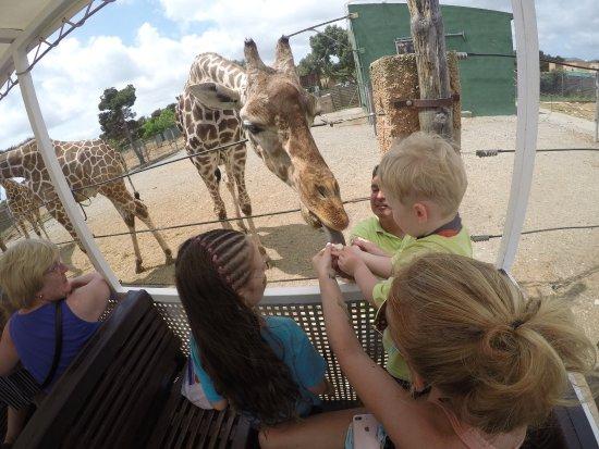 Safari Zoo: photo7.jpg