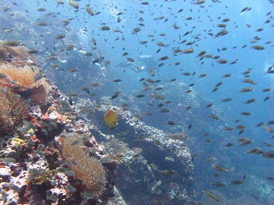 CSI: SAMUI Dive School : Sail Rock - Discover Scuba - 01 May 2017