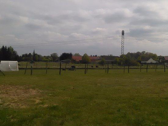 Gruenheide, Germania: Straußengehege