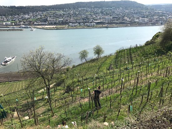 Weingut Chat Sauvage