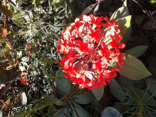 Rhododendron Species Botanical Garden: IMG_20170510_115447_large.jpg
