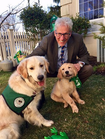 The Wilshire Grand Hotel: Seeing Eye dogs in training and playing in our Yappy Yard