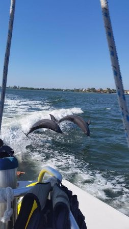 Siesta Key Watersports: Dolphins playing in the wake