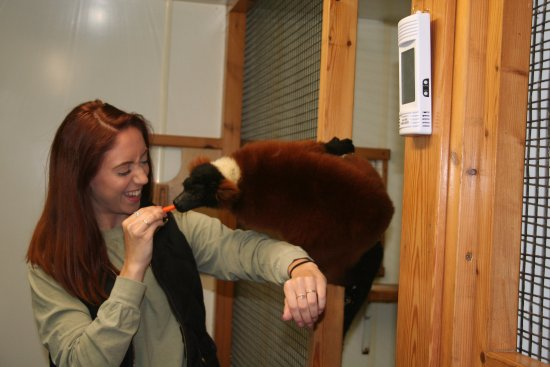 Lemur Linton Zoo