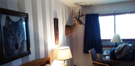 Raton, NM: If you want a deer head on the wall, this is the place for you!