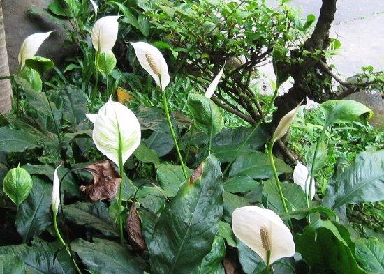 Chua Vinh Nghiem: les fameuses fleurs-feuilles