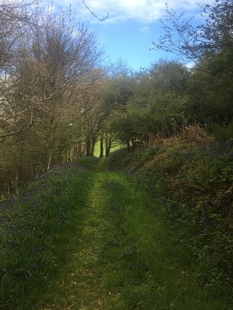 Stowford Farm Meadows: photo0.jpg