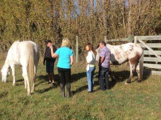 Rangiora, New Zealand: Ride our wunderful horse Hamish