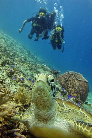 Pemenang, إندونيسيا: Gili Divers Mentigi Bay