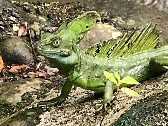 Sarapiqui, Costa Rica: photo0.jpg