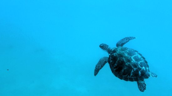 Quiver Dive Team: A turtle seen on the Sugarwreck site