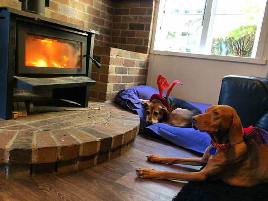 Hekerua Lodge Backpackers Hostel: We burn the fire in winter time! Mayday and Chica love it.