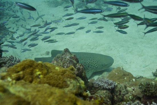 Ambatoloaka, Madagascar: plongée sur kalakajoro ..........
