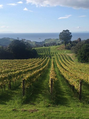 Hekerua Lodge Backpackers Hostel: Walk around the vineyards and do some wine tasting! There are 25 vineyards on the island.