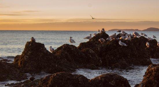 Oak Harbor, WA: North Beach