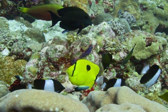 Ambatoloaka, Madagascar: plongée sur le tombant black
