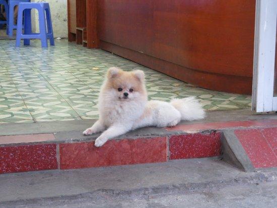 Custom Vietnam Travel Day Tours: Hanoi,all dogs looks like teddy bears!
