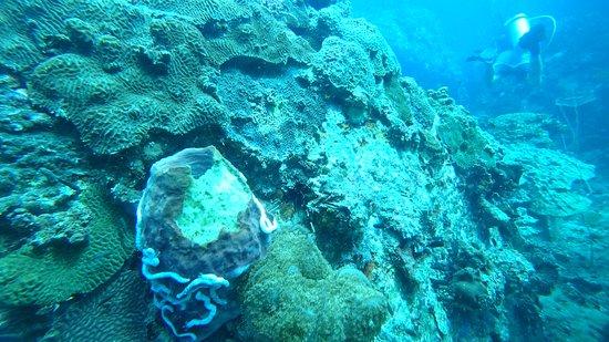 Impian Divers : DSC00318_large.jpg