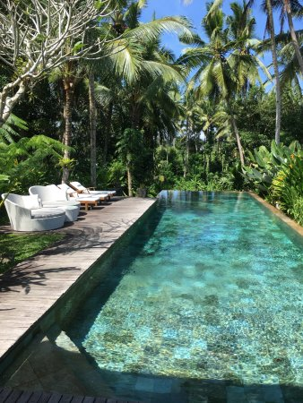 Swarapadi Villa: Gorgeous pool with jungle view