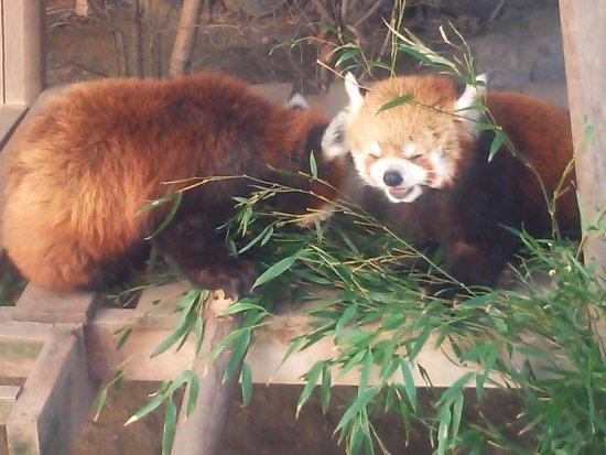 Hamamatsu City Zoo: DSC_0063_large.jpg