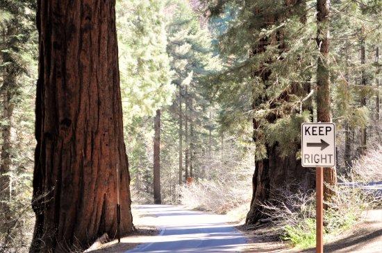 Between The Trees Picture Of Generals Highway Sequoia