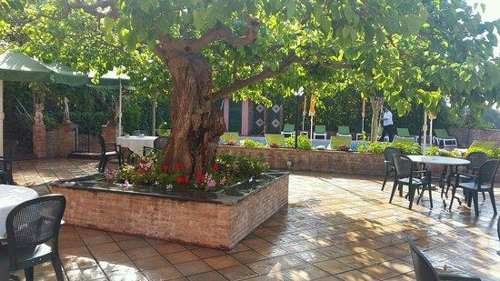 Hotel Villa Sirina: Die Frühstücksterasse unter dem grossen, schattenspendenden Maulbeerbaum.